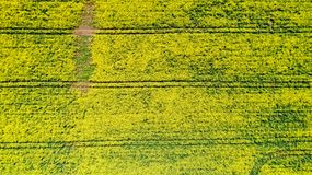 Powietrzna fotografia rapeseed kwiaty, Francja zdjęcia stock