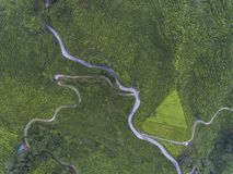 Powietrzna fotografia - widok z lotu ptaka herbaciana plantacja w mglistym ranku obrazy royalty free