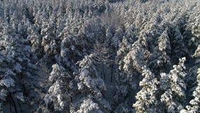 Powietrzna fotografia zima śnieżny iglasty Bożenarodzeniowy las zbiory
