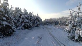 Powietrzna fotografia zima śnieżny iglasty Bożenarodzeniowy las zbiory wideo