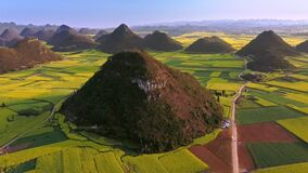Powietrzna truteń orbita strzelał żółty rapeseed kwiatu pole, Luoping, Chiny zbiory