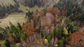 Powietrznego trutnia materiału filmowego pionowo widok: lot nad jesieni kolorowymi lasowymi Karpackimi górami, Ukraina, Europa ma zbiory