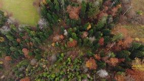 Powietrznego trutnia materiału filmowego pionowo widok: lot nad jesieni kolorowymi lasowymi Karpackimi górami, Ukraina, Europa ma zdjęcie wideo