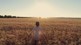 Powietrznej fotografii dziewczyny bieg krzyż pszeniczny pole przy zmierzchem Zwolnione tempo, wysoka prędkości kamera zbiory wideo