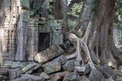 Powietrzni korzenie lub liany nad kamienną ścianą Angkor Wat krajobraz UNESCO ochraniający khmer dziedzictwo fotografia royalty free