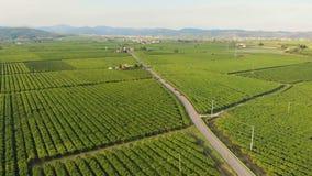 Powietrzni lasów poly winnicy gronowi zdjęcie wideo