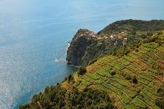 powietrzni morza śródziemnomorskiego widok winnicy obrazy royalty free
