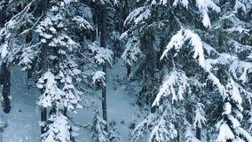 Powietrzni zim drewna Z Śnieżny Spadać zbiory wideo