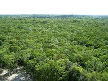 powietrzny America środkowy dżungli Mexico widok zdjęcie stock