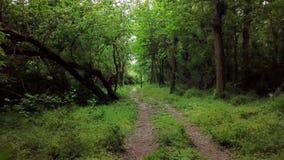 Powietrzny chodzenie między drzewami w fantazja lesie zbiory wideo