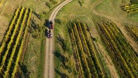 Powietrzny 4k trutnia widok stary koń jadący fury odtransportowania turyści w winnicy zbiory wideo