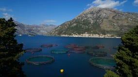 Powietrzny krótkopęd gospodarstwo rolne dla rosnąć skorupy, mussels i ostrygi, zbiory