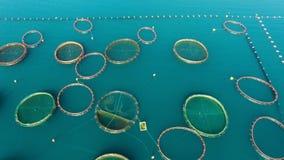 Powietrzny krótkopęd gospodarstwo rolne dla rosnąć skorupy, mussels i ostrygi, zdjęcie wideo