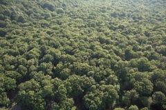 powietrzny las Zdjęcia Stock