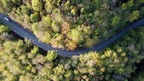 Powietrzny lot nad drogą między spadek zieleni drzewami Jesień kolory Antena zielony las i samochodowy jeżdżenie zbiory wideo
