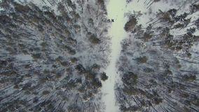Powietrzny lot nad lasową drogą zdjęcie wideo