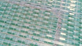 Powietrzny lub odg?rny strza? nad szklarnia Organicznie kultywacja naturalni i ?wiezi warzywa zbiory