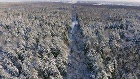 Powietrzny materiał filmowy latanie między pięknymi śnieżnymi drzewami po środku pustkowia w Lapland Finlandia zbiory
