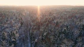 Powietrzny materiał filmowy latanie między pięknymi śnieżnymi drzewami po środku pustkowia w Lapland Finlandia zdjęcie wideo