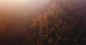 Powietrzny materiał filmowy lasu, trutnia początki PAnning Od chmur W kierunku lasu postu, Złotego i Czerwonego Colour drzew, sło zbiory wideo