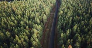 Powietrzny materiał filmowy Nad Zielonej sosny i Żółtej brzozy lasem z drogą po środku go, kamera Podąża drogę zdjęcie wideo