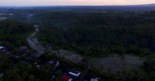 Powietrzny materiał filmowy ryż tarasuje na zmierzchu blisko Ubud, Bali zbiory