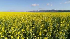 Powietrzny materiał filmowy wegetujący pola w Południowa Afryka zdjęcie wideo