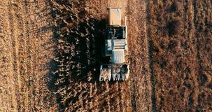 Powietrzny materiał filmowy, widok syndykata żniwiarz i szczegóły jesieni żniwo kukurydzany pole, zbiory