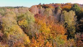Powietrzny materiału filmowego widok Barwioni jesieni drzewa Lot nad jesieni górami z lasami, łąkami i wzgórzami w zmierzch miękk zdjęcie wideo