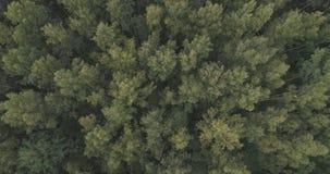 Powietrzny odgórny widok nad lato lasem na chmurnym dniu Zdjęcia Royalty Free