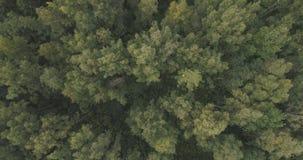 Powietrzny odgórny widok nad lato lasem na chmurnym dniu Obraz Stock
