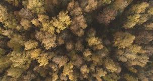 Powietrzny odgórny widok nad polem i jesień lasem w ranku fotografia stock