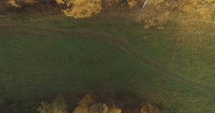 Powietrzny odgórny widok nad polem i jesień lasem w ranku zdjęcia royalty free