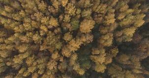 Powietrzny odgórny widok nad polem i jesień lasem w ranku zdjęcia stock