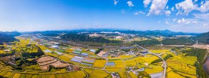 Powietrzny panorama widok Korea ryż pole w Andong mieście, Południowy Korea obraz royalty free