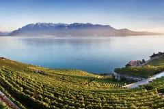 Powietrzny panoramiczny widok miasto Vevey przy Jeziornym Genewa z winnicami sławny Lavaux wina region na pięknym słonecznym dniu obrazy royalty free