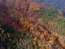 Powietrzny pionowo widok jesień las fotografia royalty free