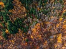 Powietrzny pionowo widok jesień las obrazy stock