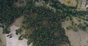 Powietrzny Ptasiego oka widoku strzał Nad miasteczko domy Obok sosen Lasowych zbiory wideo