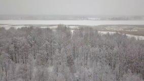 Powietrzny quadcopter widok śnieżny las Wiele drzewa zakrywający śniegiem zbiory wideo