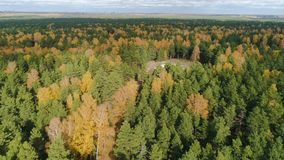 Powietrzny ruch przez sosen i złocisty brzoza las popióły zdjęcie wideo