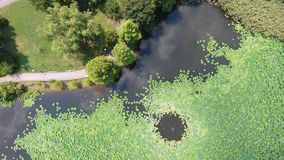 Powietrzny trutnia lot nad pięknym stawem wypełniał z wodnymi lelujami obrazy stock