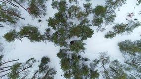 Powietrzny trutnia materiał filmowy Odgórnego widoku zimy las zbiory