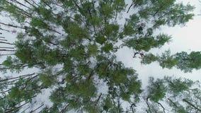 Powietrzny trutnia materiał filmowy Odgórnego widoku zimy las zdjęcie wideo