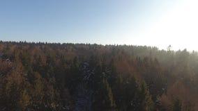 Powietrzny trutnia materiału filmowego widok: Lato góry z lasami, łąkami i wzgórzami w zmierzchu, zaświecają Kamera zwrota dobro zdjęcie wideo