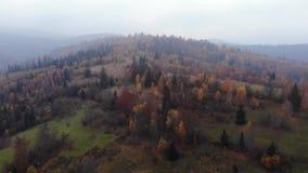 Powietrzny trutnia materiału filmowego widok: lot nad jesieni górą z lasami i polami Karpackie góry, Ukraina, Europa zdjęcie wideo