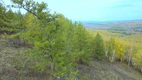 Powietrzny trutnia materiału filmowego widok: Lot nad jesieni górami z lasami, łąkami i wzgórzami w zmierzchu miękkim świetle, _ zbiory wideo