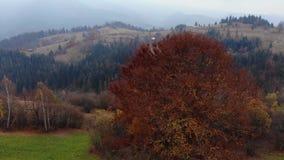 Powietrzny trutnia materiału filmowego widok: trutnia trzask drzewo w jesieni górze Karpackie góry, Ukraina, Europa zbiory wideo