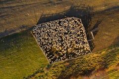 Powietrzny trutnia widok cakle w sheepfold obrazy royalty free