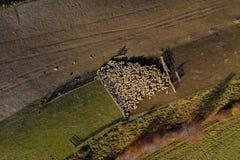 Powietrzny trutnia widok cakle w sheepfold zdjęcie stock